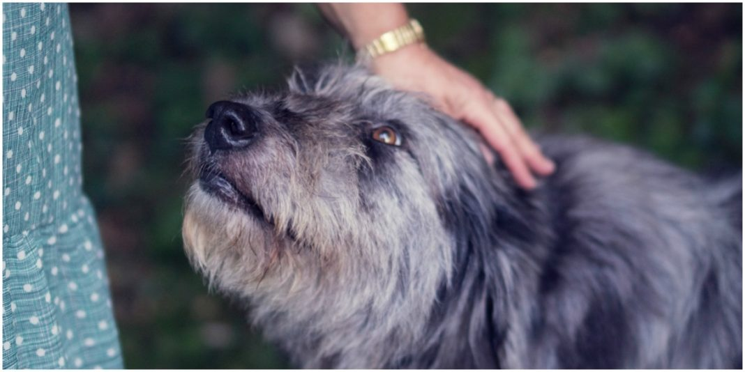 MediPets CBD For Pets can bring lots of benefits to your pet