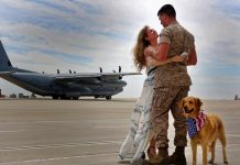 Why You Should Spay or Neuter Your Pets Army