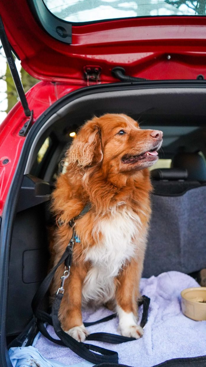 Pcs Tips: How To Have A Safe Moving Day With Pets